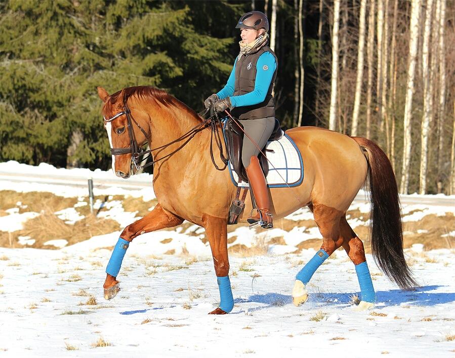 Bilden i reportaget är tagen av duktiga Birgitta Brorson en vinterdag på vinterns favoritridplats- fältet i förmiddagssolen