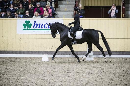 Världsmästaren och Olympiska mästaren Charlotte Dujardin på en av de fyraåriga hästarna som hon red som testryttare! Så himla imponerad av denna fantastiskt duktiga människa!!! (Bild lånad från tidningen ridsport)